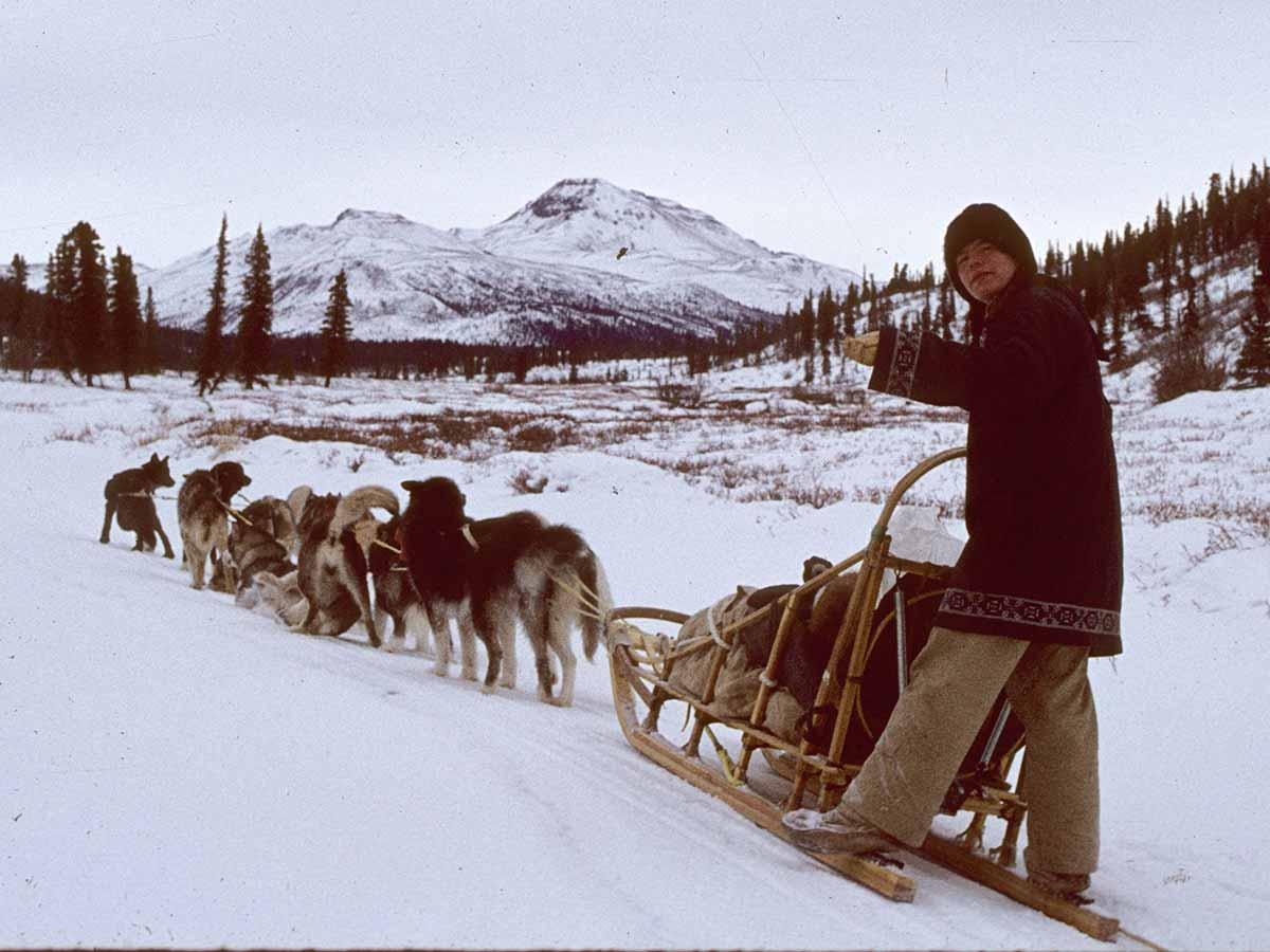 77 Wrangells Mushing