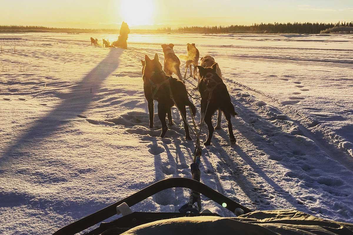 Dogs W Sun
