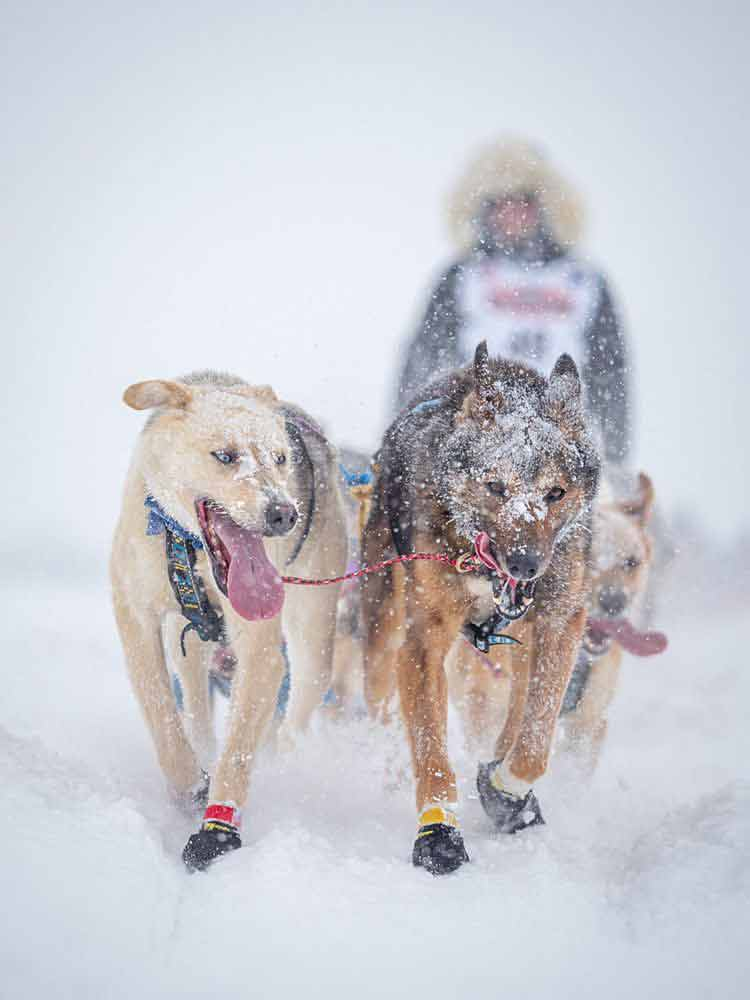 '20 Riley Iditarod Start