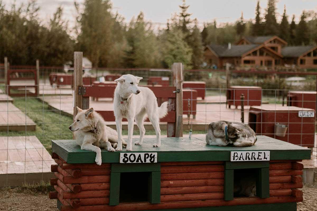 Dogs In Horseshoe Pen